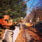 Fall in Lambertville